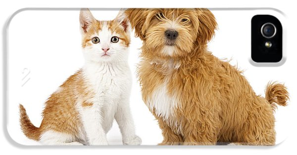 Indoors iPhone 5 Cases - Orange and White Puppy and Kitten iPhone 5 Case by Susan  Schmitz