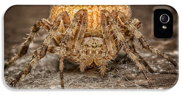 Arthropod iPhone 5 Cases - Orange Marbled Orb Weaver iPhone 5 Case by Adam Romanowicz