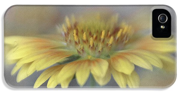 Lensbaby Macro iPhone 5 Cases - Oranges and Lemons Blanket Flower iPhone 5 Case by David and Carol Kelly