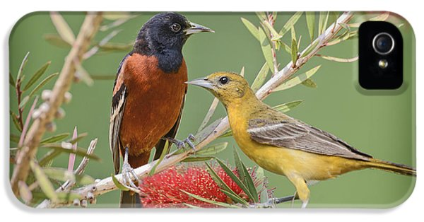 Orchard Oriole Pair IPhone 5 / 5s Case by Bonnie Barry