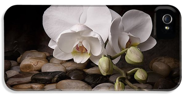 Blooming iPhone 5 Cases - Orchid - Sensuous Virtue iPhone 5 Case by Tom Mc Nemar