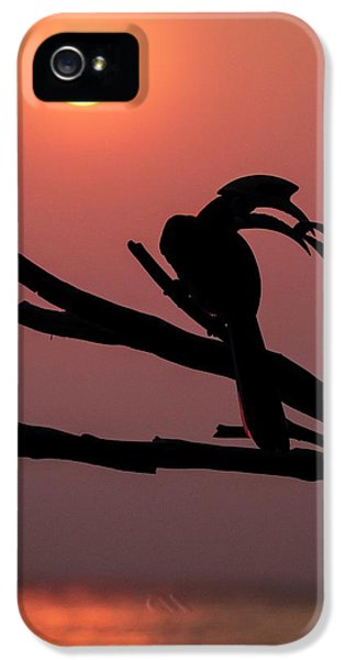 Oriental Pied Hornbills IPhone 5 / 5s Case by Paul Williams