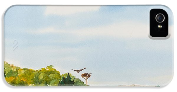 Ospreys On The Vineyard Watercolor Painting IPhone 5 / 5s Case by Michelle Wiarda