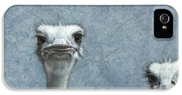 Gray iPhone 5 Cases - Ostriches iPhone 5 Case by James W Johnson