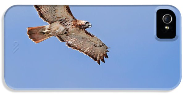 Redtail iPhone 5 Cases - Out Of The Blue Square iPhone 5 Case by Bill  Wakeley