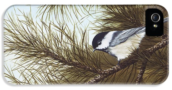 Out On A Limb IPhone 5 / 5s Case by Rick Bainbridge