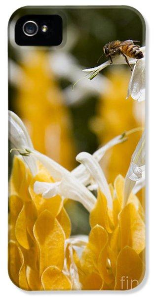 Tubular iPhone 5 Cases - Pachystachys Lutea - Lollipop Plant - Golden Candle - Shrimp Plant iPhone 5 Case by Sharon Mau
