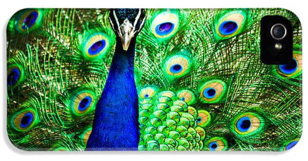 Avian iPhone 5 Cases - Pageantry Of Colors iPhone 5 Case by Daniel Chen