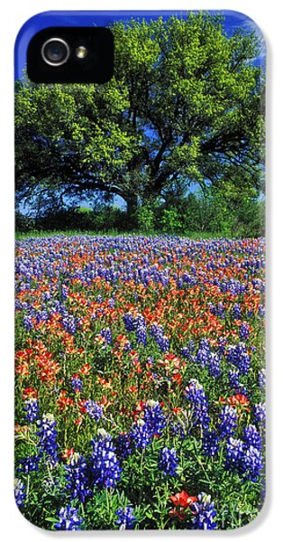 Texas iPhone 5 Cases - Paintbrush and Bluebonnets - FS000057 iPhone 5 Case by Daniel Dempster