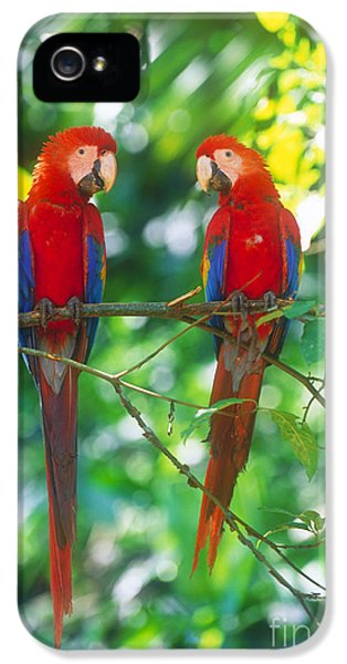 Pair Of Scarlet Macaws IPhone 5 / 5s Case by Art Wolfe