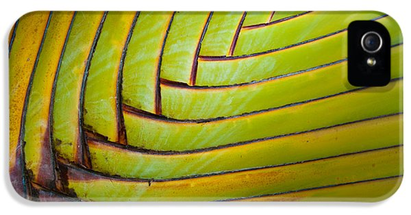 Textures iPhone 5 Cases - Palm Tree Leafs iPhone 5 Case by Sebastian Musial