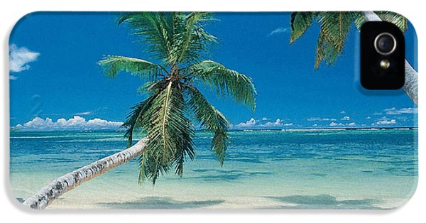 Palm Tree Painting IPhone 5 / 5s Case by Marvin Blaine