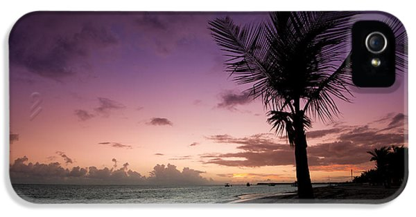 Tree iPhone 5 Cases - Palm Tree Sunrise iPhone 5 Case by Sebastian Musial