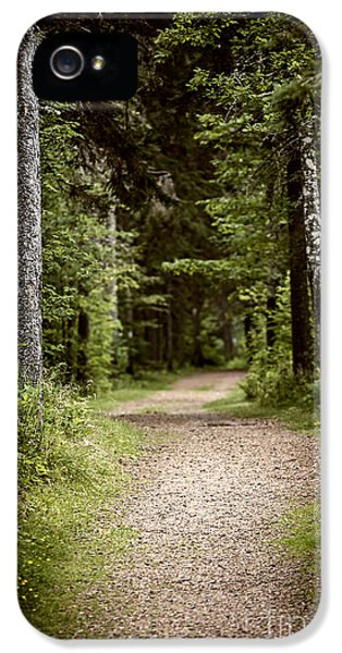 Spooky iPhone 5 Cases - Path in old forest iPhone 5 Case by Elena Elisseeva