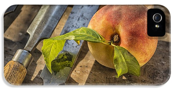 Workbench iPhone 5 Cases - Peach on a Workbench iPhone 5 Case by Terry Rowe