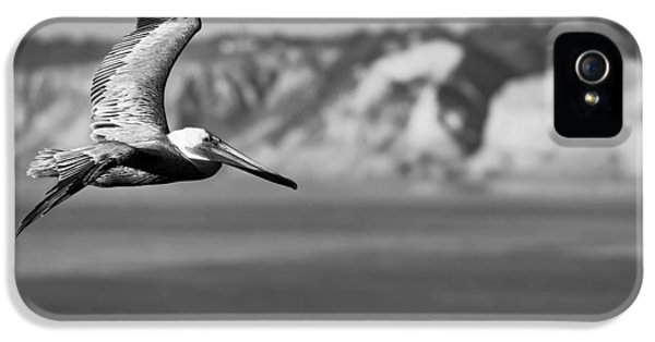 Brown iPhone 5 Cases - Pelican in Black and White iPhone 5 Case by Sebastian Musial