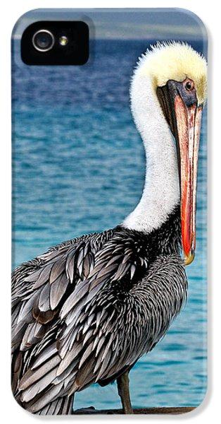 State Bird iPhone 5 Cases - Pelican Portrait iPhone 5 Case by Jean Noren