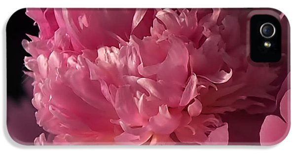 Floral iPhone 5 Cases - Peony iPhone 5 Case by Rona Black