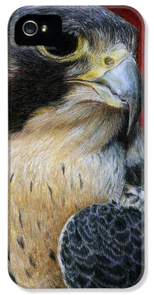 Peregrine Falcon IPhone 5 / 5s Case by Pat Erickson