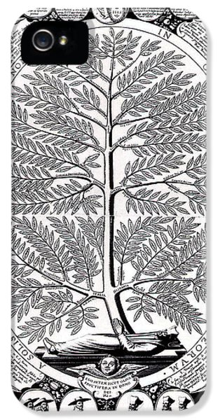 Diseased iPhone 5 Cases - Peruvian Bark or Jesuit Tree iPhone 5 Case by Unknown