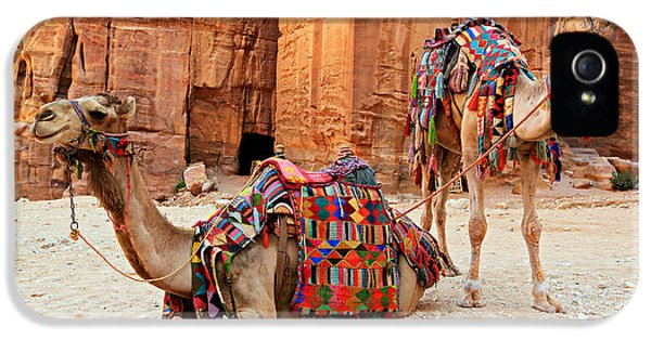 Petra Camels IPhone 5 / 5s Case by Stephen Stookey