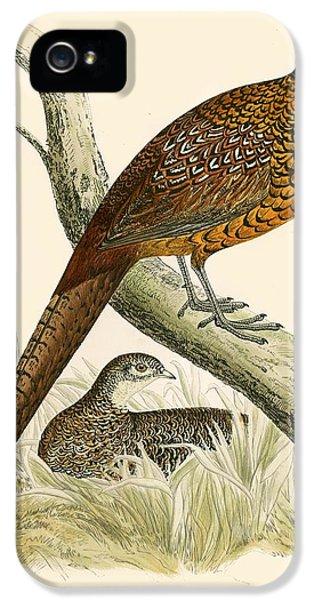Pheasant IPhone 5 / 5s Case by Beverley R Morris
