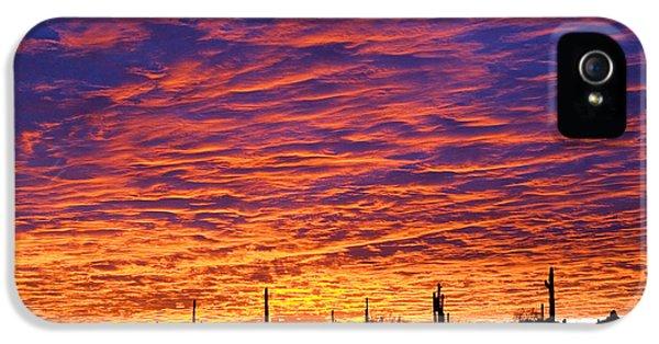 Phoenix Sunrise IPhone 5 / 5s Case by Jill Reger