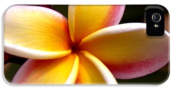 Pink And Yellow Plumeria IPhone 5 / 5s Case by Brian Harig