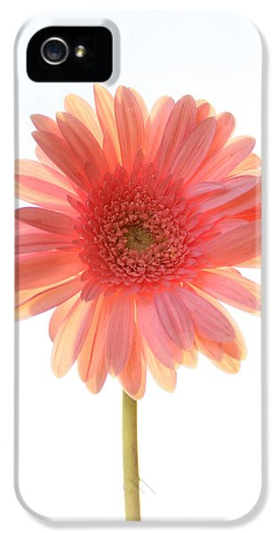 Pink Flowers iPhone 5 Cases - Pink Lemonade iPhone 5 Case by Amy Tyler