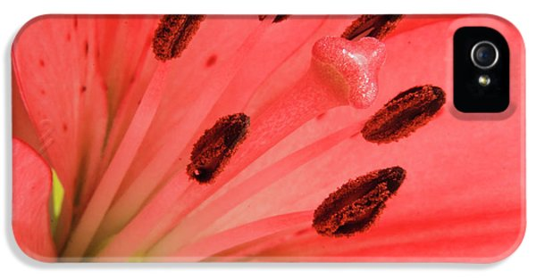 Pistil iPhone 5 Cases - Pink Lily Macro iPhone 5 Case by Adam Romanowicz