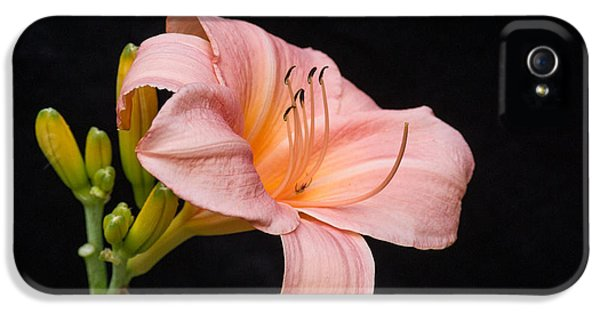 Chlorophyll iPhone 5 Cases - Pink Passion Lily and Buds iPhone 5 Case by Douglas Barnett