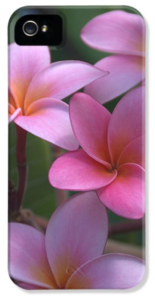 Pink Plumeria IPhone 5 / 5s Case by Brian Harig