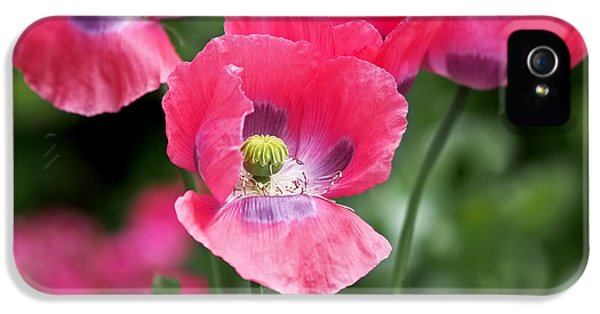 Pink Poppies IPhone 5 / 5s Case by Rona Black