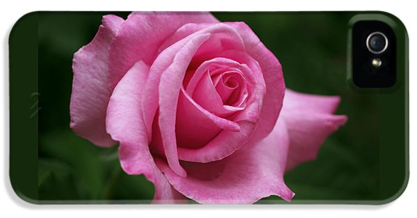 Pink Rose Perfection IPhone 5 / 5s Case by Rona Black