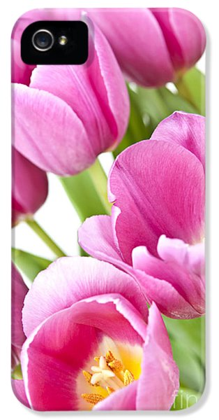 Spring iPhone 5 Cases - Pink tulips iPhone 5 Case by Elena Elisseeva