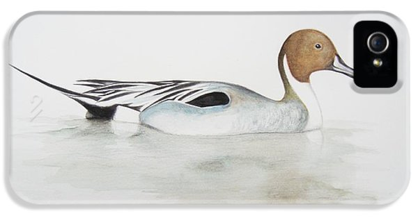 Beak iPhone 5 Cases - Pintail Duck iPhone 5 Case by Ele Grafton