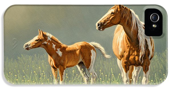 Hose iPhone 5 Cases - Pinto Mare and Colt iPhone 5 Case by Paul Krapf