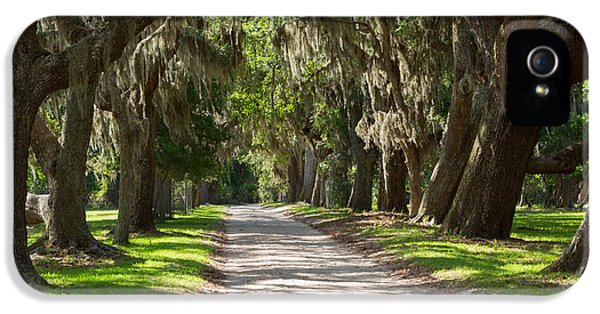 Historic Oak iPhone 5 Cases - Plantation Road iPhone 5 Case by Louise Heusinkveld