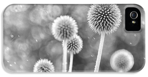 Echinops iPhone 5 Cases - Plants in the Rain iPhone 5 Case by Natalie Kinnear