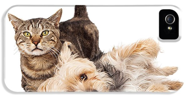 Playful iPhone 5 Cases - Playful Dog and Cat Laying Together iPhone 5 Case by Susan  Schmitz