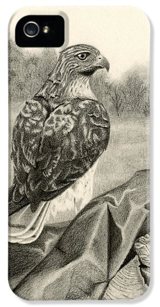 Red Tailed Hawk iPhone 5 Cases - Pleasant Valley Red-tailed Hawk iPhone 5 Case by Sarah Batalka
