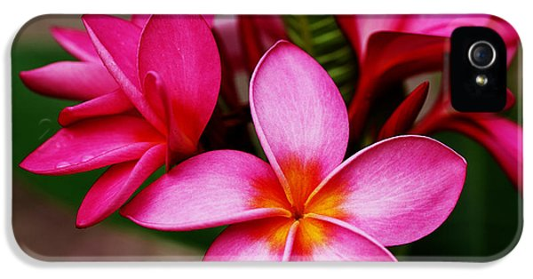 Plumeria 9 IPhone 5 / 5s Case by Cheryl Young