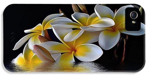 Yellow And White Plumeria Flower Frangipani iPhone 5 Cases - Plumeria Alba iPhone 5 Case by Kaye Menner
