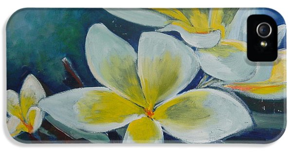 Yellow And White Plumeria Flower Frangipani iPhone 5 Cases - Plumeria bloom iPhone 5 Case by Aline Halle-Gilbert