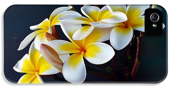 Yellow And White Plumeria Flower Frangipani iPhone 5 Cases - Plumeria Bouquet 2 iPhone 5 Case by Kaye Menner