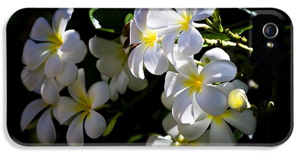 Yellow And White Plumeria Flower Frangipani iPhone 5 Cases - Plumeria Glow iPhone 5 Case by Christi Kraft