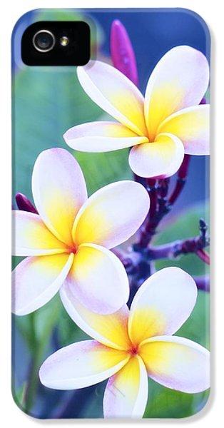 Plumerias iPhone 5 Cases - Plumeria in Pastels iPhone 5 Case by Jade Moon