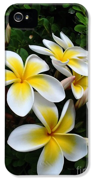 Yellow And White Plumeria Flower Frangipani iPhone 5 Cases - Plumeria in the Sunshine iPhone 5 Case by Kaye Menner