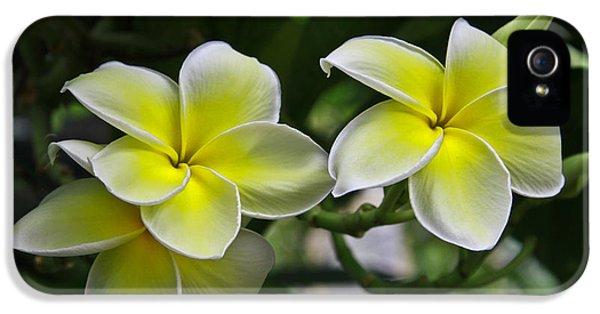 Yellow And White Plumeria Flower Frangipani iPhone 5 Cases - Plumeria iPhone 5 Case by John Roberts