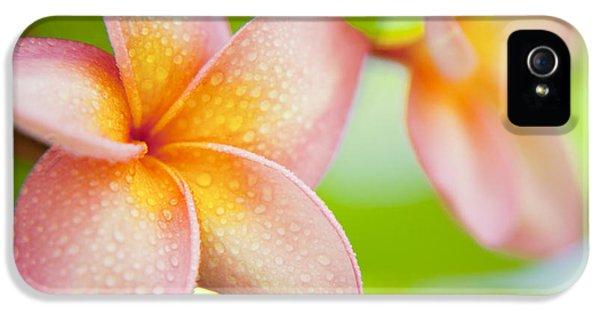 Plumeria Pastels IPhone 5 / 5s Case by Sean Davey